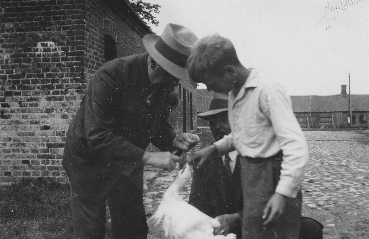Dr. Løwe hjælper en stork i nød 1933